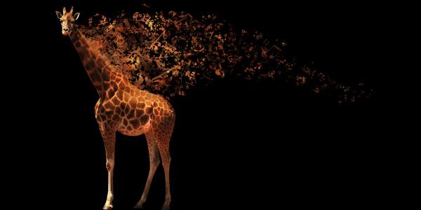 Музыкальный жираф *